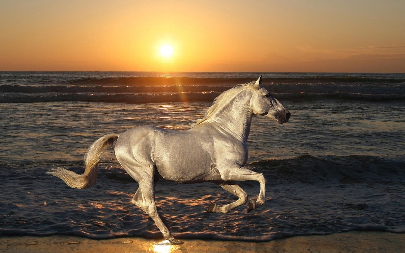 To acquire Horses White running on beach pictures picture trends