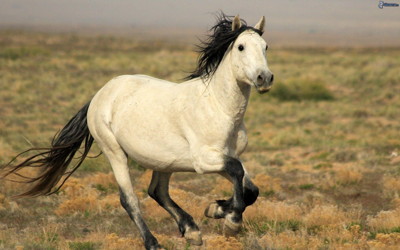 White running horses - photo#22