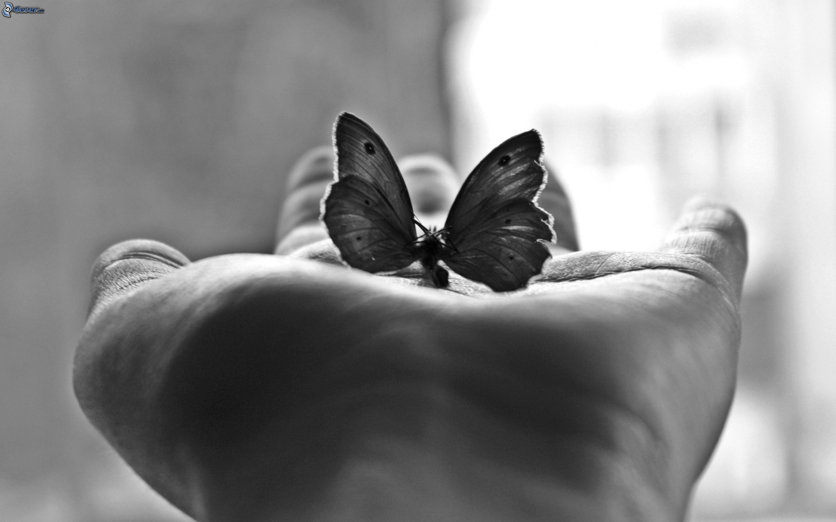 Uncategorized Butterfly Hand butterfly hand black and white photo 238842 jpg download picture