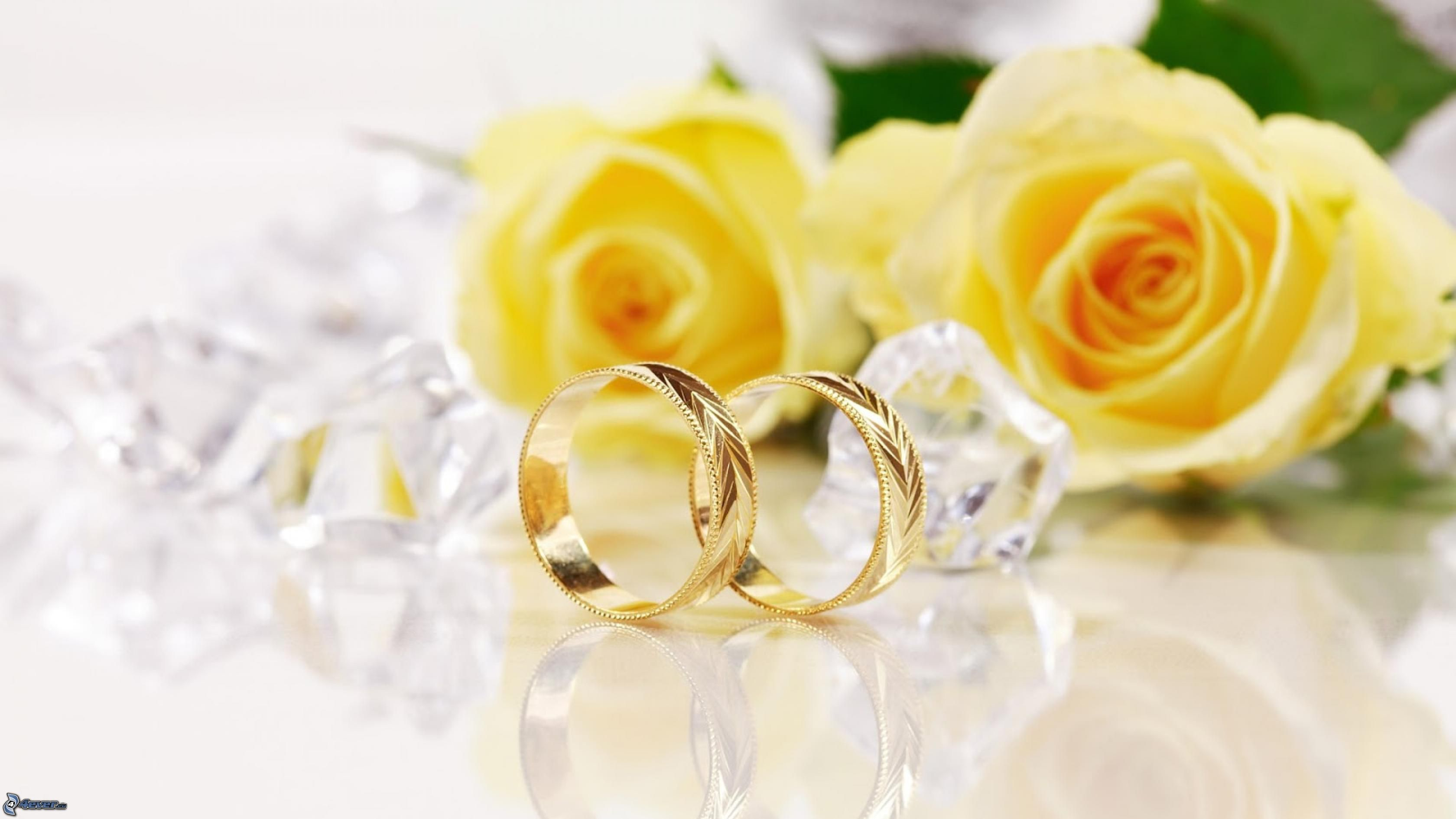 You're Downloading Preview If You Want The Picture In Full Resolution Use This Link To Download: Yellow Roses Wedding Rings At Reisefeber.org