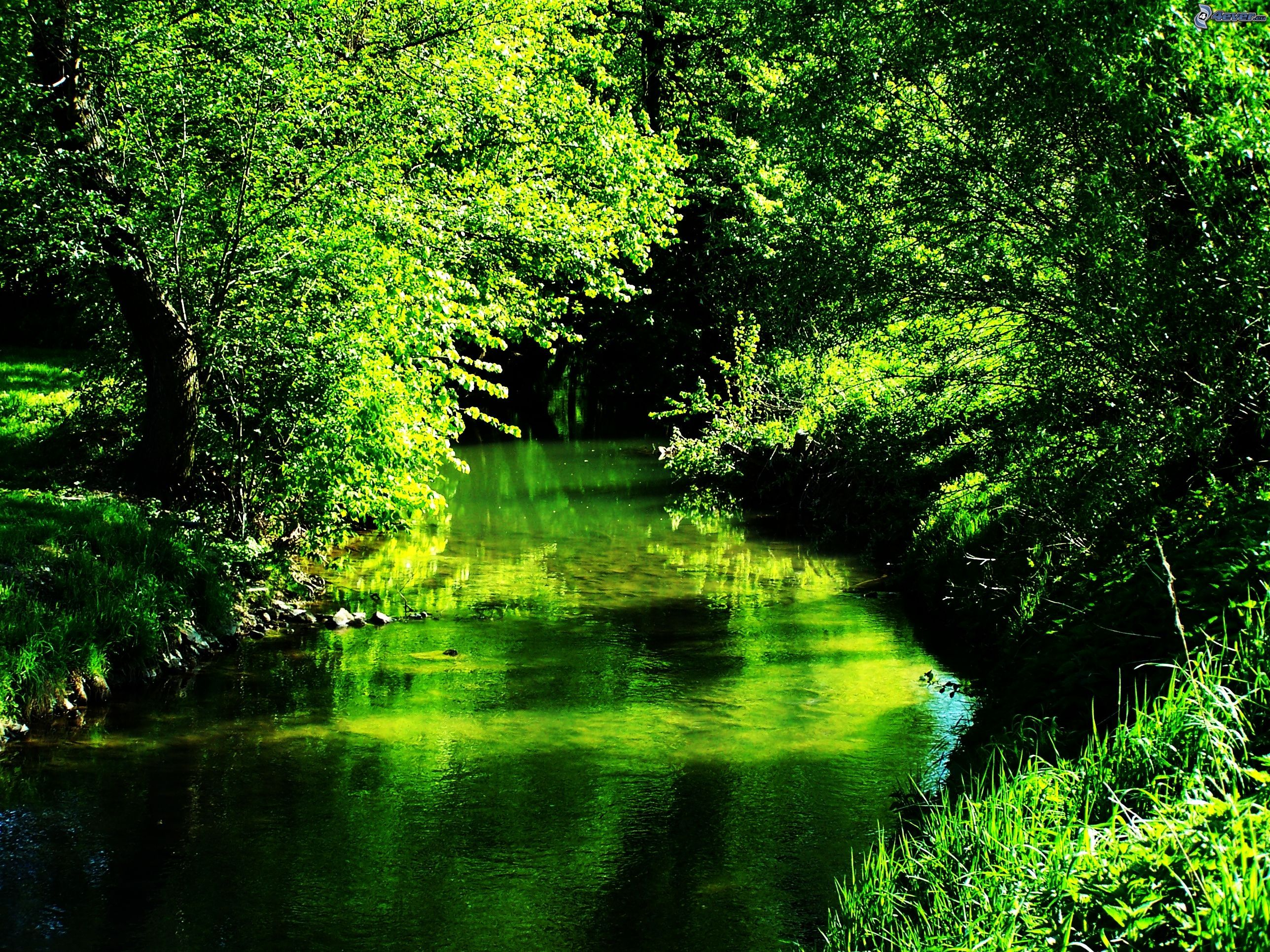 Http Pictures 4ever Eu Nature Landscapes Green Nature 148166