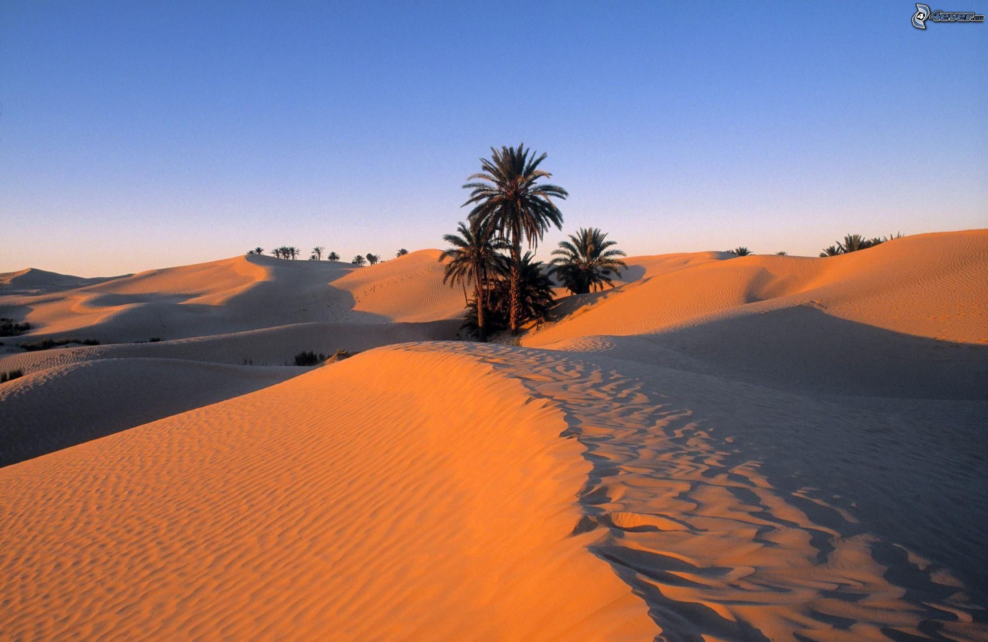 Dvoboj slika  - Page 24 Sahara,-palm-tree,-desert-150213