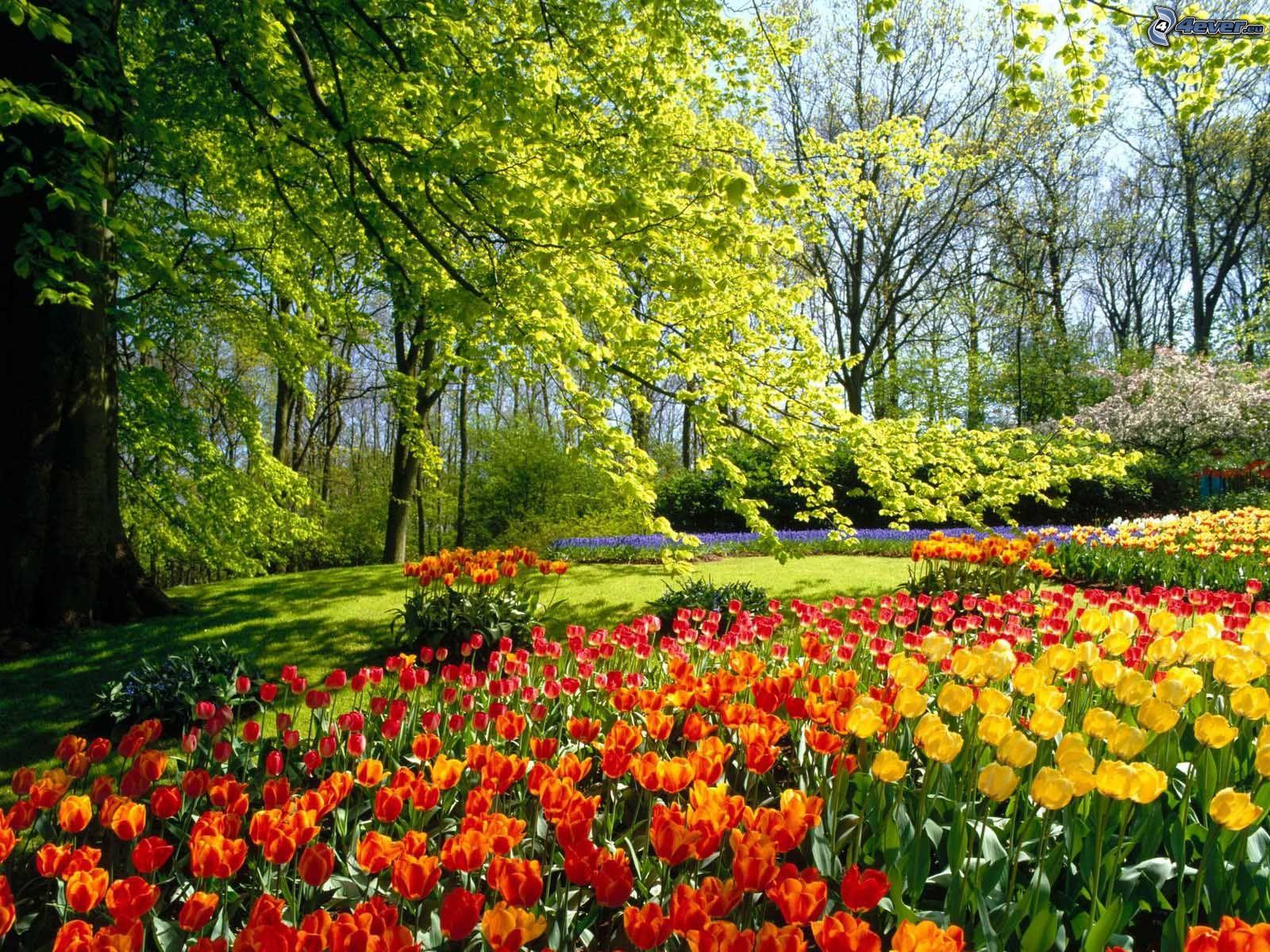 Risultati immagini per spring landscapes