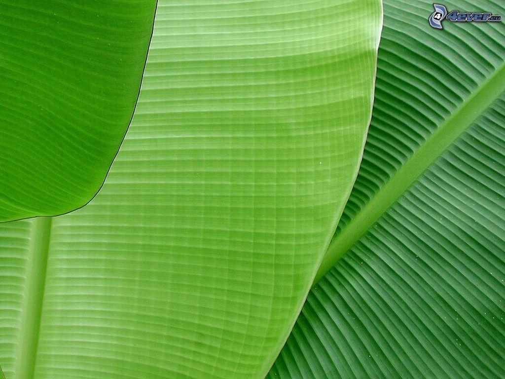 wallpaper hd banana leaf in sea mega wallpapers