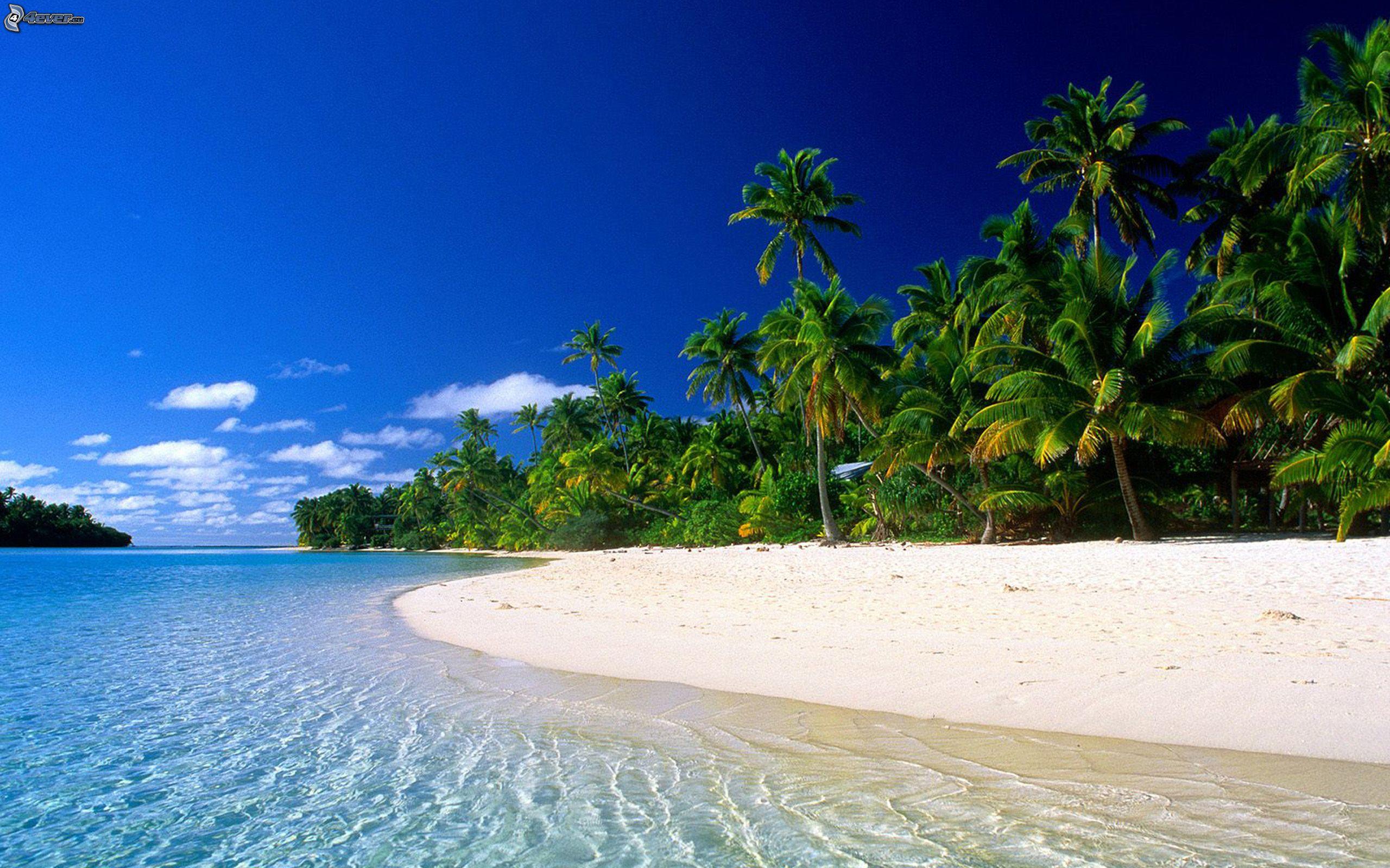 Island Beach Palm Tree Beach Trees Cook Island Tahiti