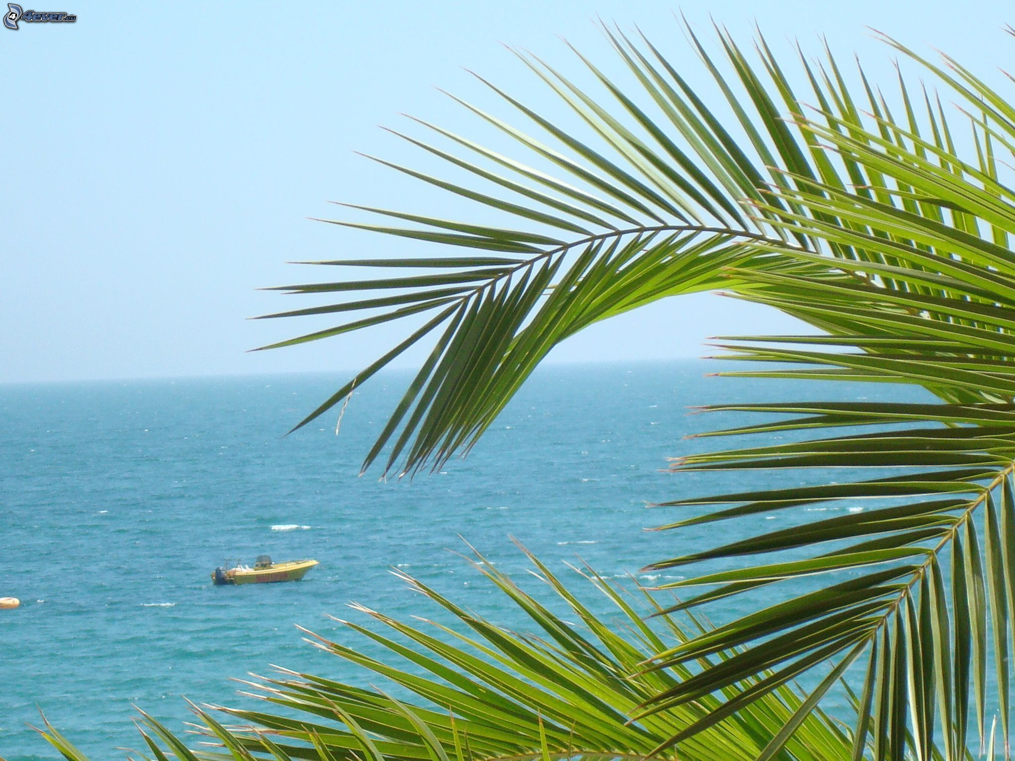 palm trees boat-#22